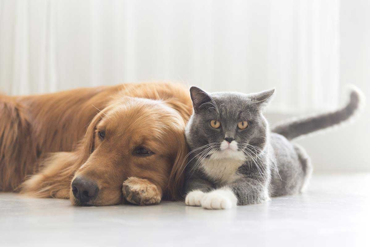 about our veterinary practice Burnaby, BC
